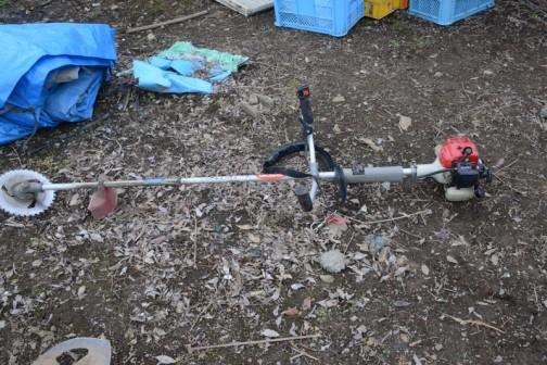収穫するのに何か機械を使ったのかと思ったら、刈り払い機でまず葉っぱを刈り払って・・・