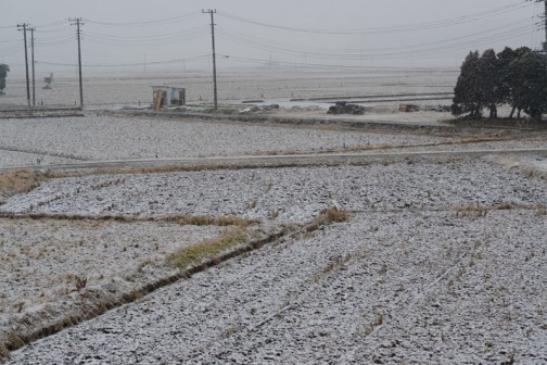予報ではちらっと降る程度だった雪、結構降ってます。明るくなったら白くてビックリ! この調子だと上はもっと白いな。(ここは海抜3Mほどの低地なのでちょっと高い町のほうと気候が違うんです。)