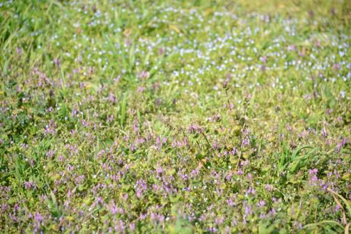 庭も今までぺたんこの草ばかりだったのに、ホトケノザやオオイヌノフグリなど、花が咲き始めました。ああ・・・また雑草との戦いが始まるのか・・・しばらく忘れいました。それって幸せですよね。