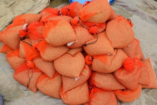 そうやって膨大な量の種籾を4キロごとに袋に入れていました。これは夢あおば。