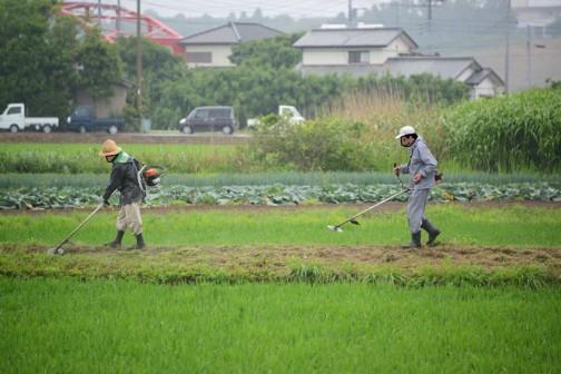 農道やその法面なども刈ります。