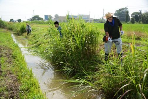 男の人たちは主に水路の草刈り。