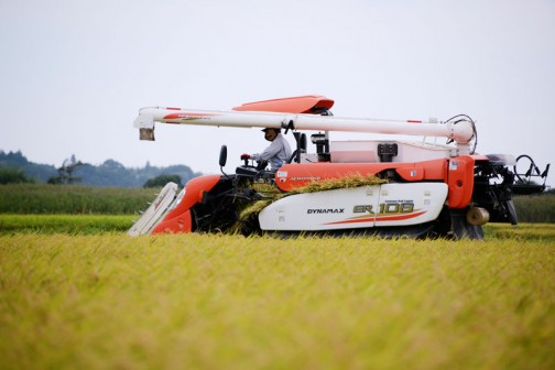 ただ、いつもならコシヒカリが植わっている田んぼが、今年は飼料稲になっていたりと、やはり食用米を作る面積は年々減っているように感じました。