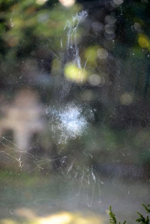 鳥が窓にぶつかると跡がつくものなんですね。大きなハトでしたが、地面に落ちることなく飛び去っていきました。しかし、よく見ると・・・