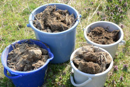 Mさんの飼料稲の田んぼで田んぼの土をもらってきました。最終的にこの土に田植えします。