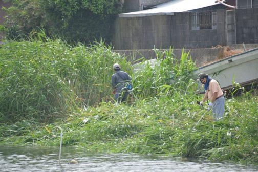 そのまま川沿いに草刈りをしながら遡っていきます。