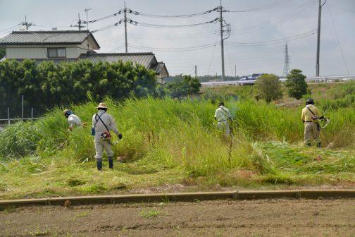 今回は集落センターそばの河川敷から刈り始めます。