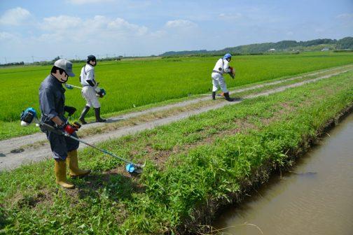 一休みした後はいつもの水路と農道の草刈り。