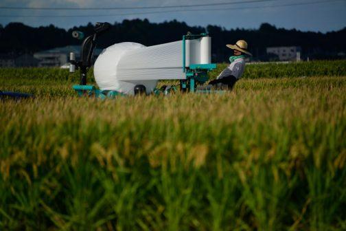 これから長丁場の稲刈りが始まります。