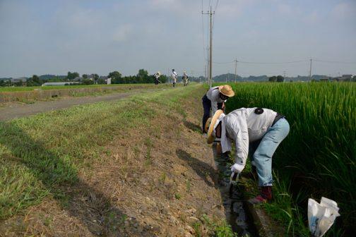その間、ヒガンバナのお世話チームはU字溝の泥上げなどをしています。