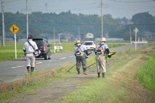 やがて大きな道で2班が合流し、農地と歩道の間や、歩道と車道の間の縁石の脇を刈りながら水路脇の農道へ向かいます。