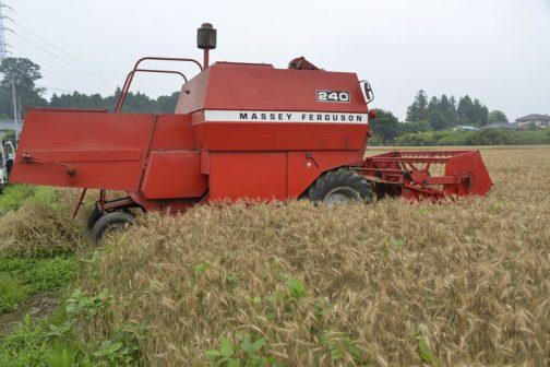 北のほうが気になりつつ・・・今日はAさんのところで見た、すごくキレイでまだまだ現役のマッセイファーガソン・コンバイン、MF240の麦刈りです。