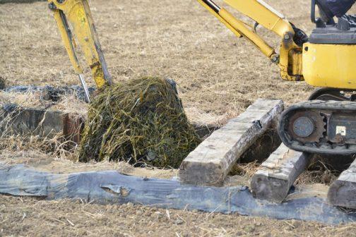 作業しているKさんによると、このように草がいっぱい生えているところは泥が少なく・・・