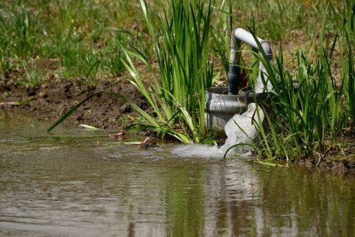 このあたりは昔霞ヶ浦の一部だったのか、地中には「マコモ」と呼ばれる有機質でスポンジ状の地層があって、あまりいじくると田んぼが深くなってしまい、トラクターがスタックすることも多いのだそうです。水栓のまわりに生えているのはちょうどマコモではないでしょうか?