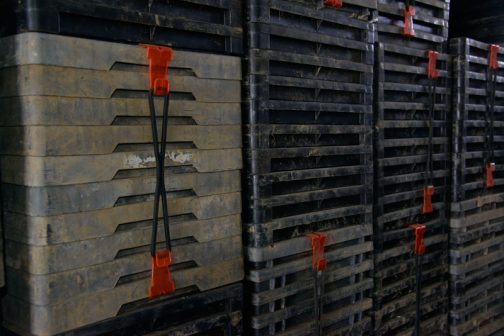 その倉庫の中で気がついたもの。膨大な苗床のトレーが並んでいるのですが、そのトレーをまとめるのにこんなグッズが・・・フックの付いたゴムバンドです。こんなもの売っているんですね・・・考えるなあ。ヒモで縛るより簡単です。