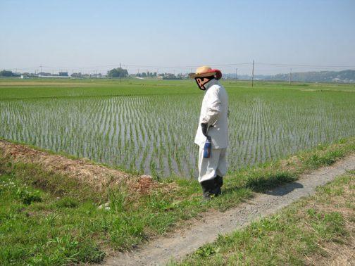 そしてこちらは農地の点検の写真・・・みなさん暑い中お疲れさまでした。次回は必ず参加するようにします!