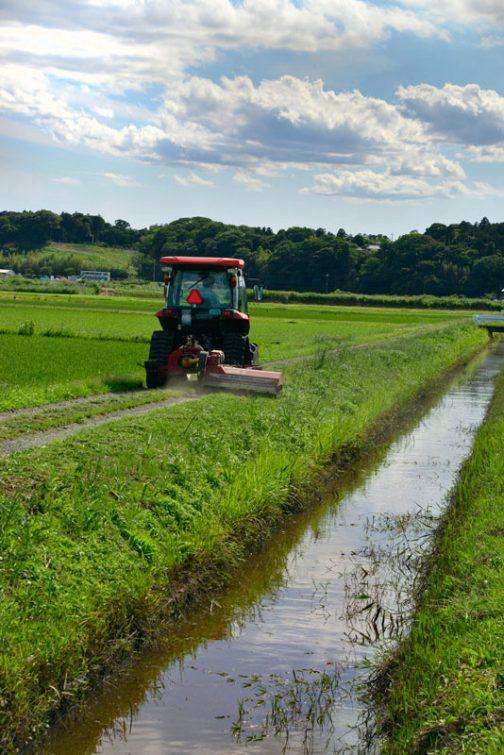 水路ギリギリに生える湿生の雑草なども減っているように思います。