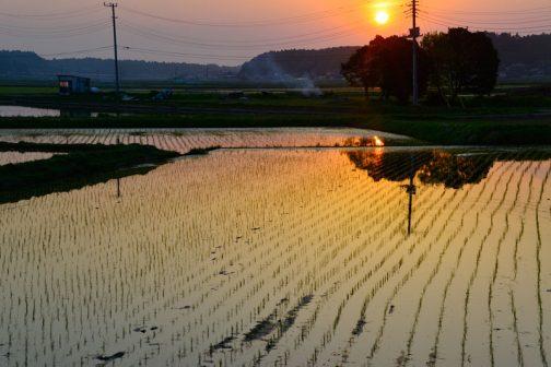 さらに時間が経って苗が植えられました。太陽もさらに右に沈んでいきます。