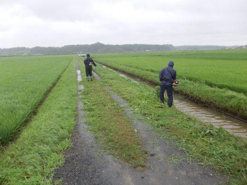 スライドモアでの草刈り後、3週間ほど経過していますので農道や水路の法面はこの通り・・・