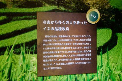 コラム 冷害から多くの人を救ったイネの品種改良  植物の栽培は、気象条件によって左右されることから、冷害が起こると、大きな被害を出してきた。各地では篤農家とよばれる研究熱心な農家が、冷害に負けずに育っていた株を何年も繰り返して栽培することによって、各地方で独特の品種が生まれていた。明治中期になると、国立の農事試験場も整備され、新しく人工的に交雑を行こなう交雑育種法が導入され、より効率的に新しい品種が、われわれの食べている米の祖先である。 とあります。 昔は冷害に強い品種を作ることによって人々が救われ、今はきっと温害(そんな言葉あるのかな?)に強い品種が研究されているのでしょうね。