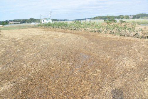 畑とは思えない風景です。Sさん、大根とか、◯◯(忘れた)の種を播いたのにダメだわ・・・と言ってました。