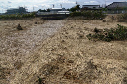 その大排水路、県道をはさんで田んぼ側から見ています。ガードレールの向こうが排水機場です。中央にくぼんだように見えるのが水路。左右に高く見えているのが農地なのですが、どちらも厚くワラに覆われていて境目がわかりにくいです。