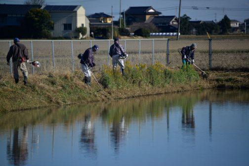こうやって見ると、ここが水没したなんて想像もつきませんが、水は刈っている人の腰上くらいまでありました。