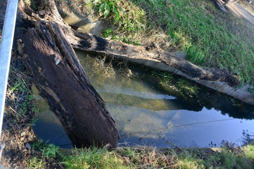 またこちらの用水に落ち込んだ丸太・・・これも移動します。
