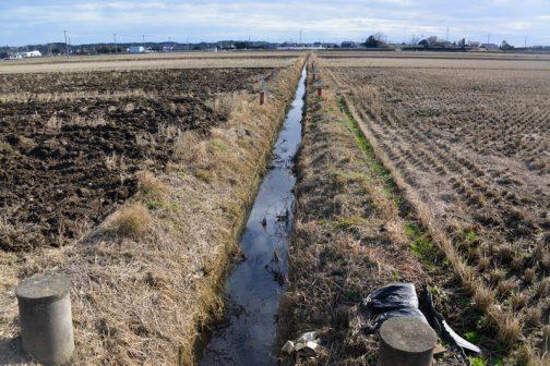 この水路の柵板を交換することにします。