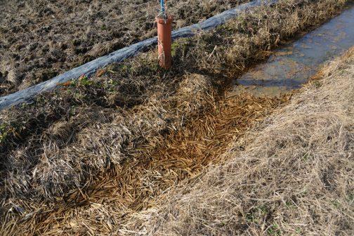 先日の水害で寄せられた稲わらもかなり落ち込んでいる感じです。こんなに埋まっていると冊板交換も大変です。ここは泥上げ後、来年度に回すことにして別の水路をあたることにします。