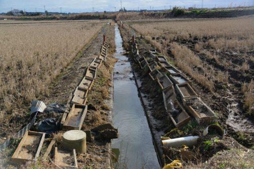 この排水路、上が下流、下が上流です。