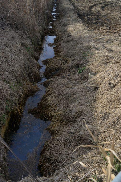 脇の水路はこの状態です。稲わらが排水路に落ち込んで水が流れません。「何とかしなくちゃなー」Mさんは言うのですが、今のところどのような方法をとるのか決まらないようです。