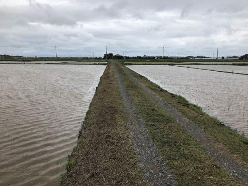 滑走路みたいです。田んぼが水に覆われていつもより広く見え、最高の季節です。でも田植えの頃はなぜか寒くなることが多く、陽気までは足並みを揃えてはくれないようです。
