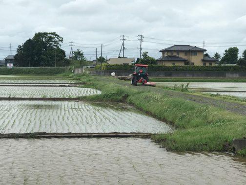 スライドモアの草刈りが始まったことは既にお伝えしました。島地区は活動範囲としては茨城県で最小じゃないかと思っていますが(事例発表などを見ても、中山間部を除きほとんどは倍以上・・・島地区より小さな活動体は見たことがありません)、それでも範囲をみな刈るのに3日ほどかかります。