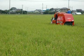 刈り残した稲を手で刈る人はいますが、機械が働く「現場」という感じです。