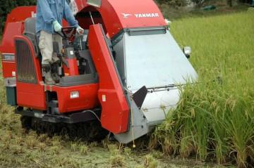 掃除機みたいな口で刈り取った稲をどんどん吸い込んでいきます