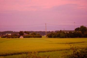 ↑クリックで拡大します 同じく8/9日朝4時頃 空も、稲も、家も、みんなみんなオレンジ