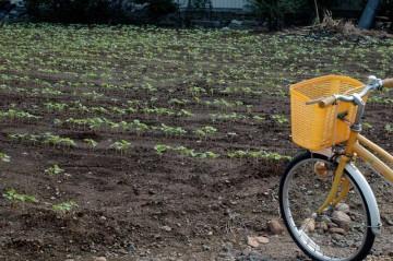 蕎麦の畑の写真