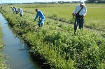 同じく水路の法面の除草です。