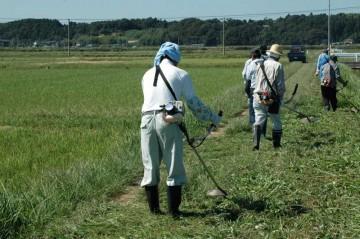農道の草刈りです。法面に比べて足場が良いので比較的刈りやすいです。