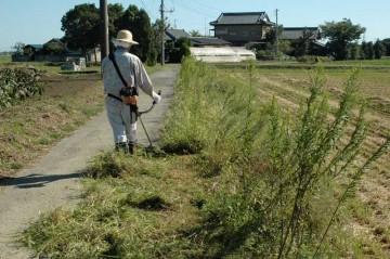 子供たちの通学路の路肩なども草刈りを行いました。