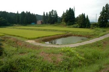 そこここにため池?が見られます。