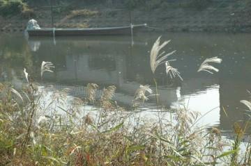 今現在(11/9日撮影)のヒシ大量発生現場の写真。ヒシは跡形もなく、ススキが揺れているだけでした。
