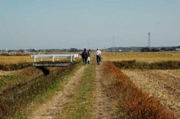 農地全体を歩いて回りますので、農道もついでに点検します。