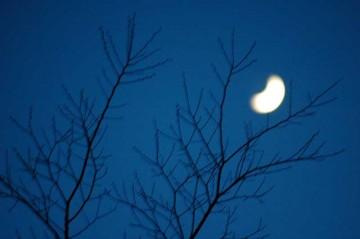夜になって、その枝に今度は月がとまっています。