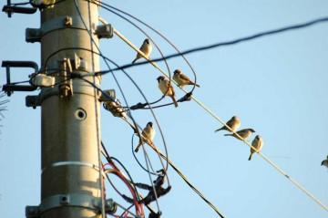 雀の写真。電柱付近にいます。