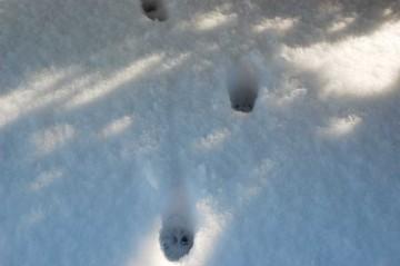 冷たいのか、ネコが恐る恐る歩いた跡がついています。