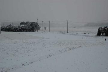 朝起きたらこんな状態・・・まるで雪国です