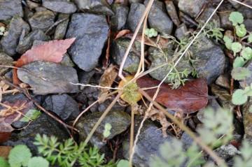葉っぱに若干元気がありませんが、どっこい静かに生きています。