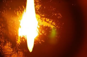 あっという間に日が昇って、鳥達の声がうるさくなってきました。木立の間から朝日がにょろっと入り込んできました。なんだか燃えてるみたいです。